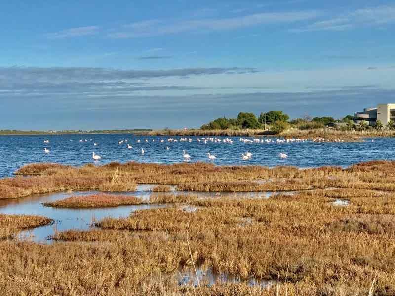 Flamingos Vanlife Camargue