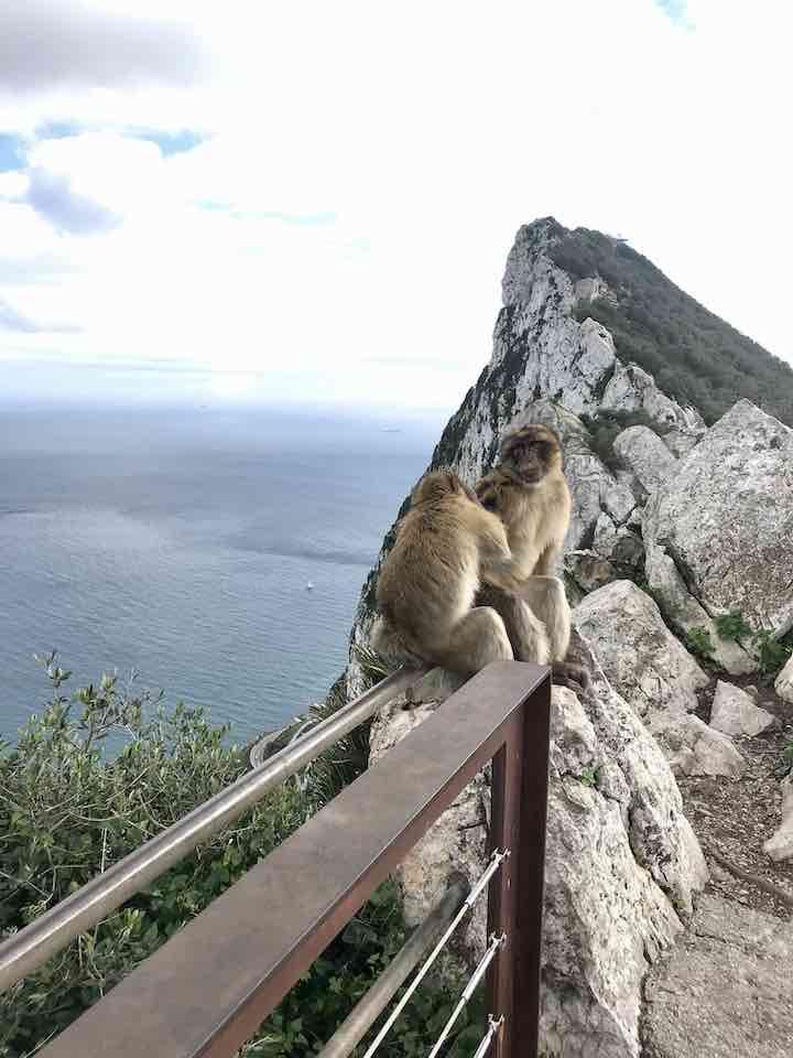 Affen am Berg von Gibraltar