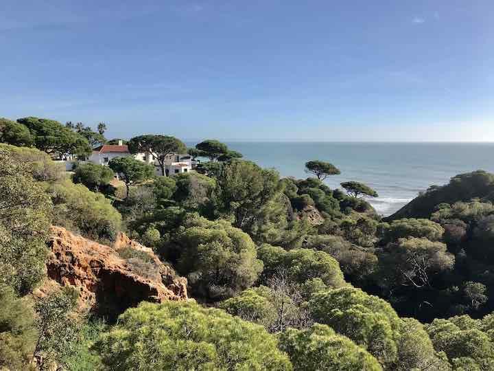 Wald an der Algarve