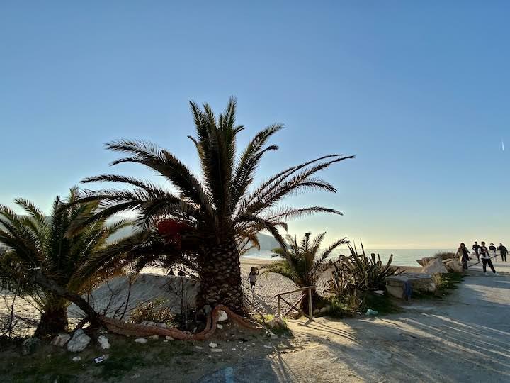 Palmen in Peschici