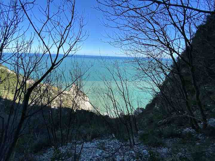 Türkises Meer mit Strauch
