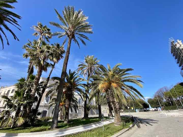 hohe Palmen Trani