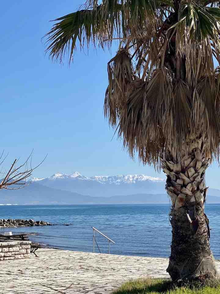 Palme und schneebedeckte Berge